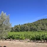 Les vignes et les collines autour des gîtes