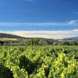 Les vignes de Villedieu